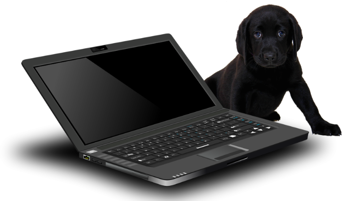 Laptop and dog