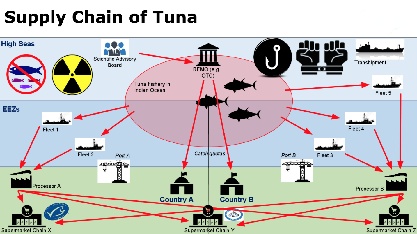 Supply Chain of Tuna